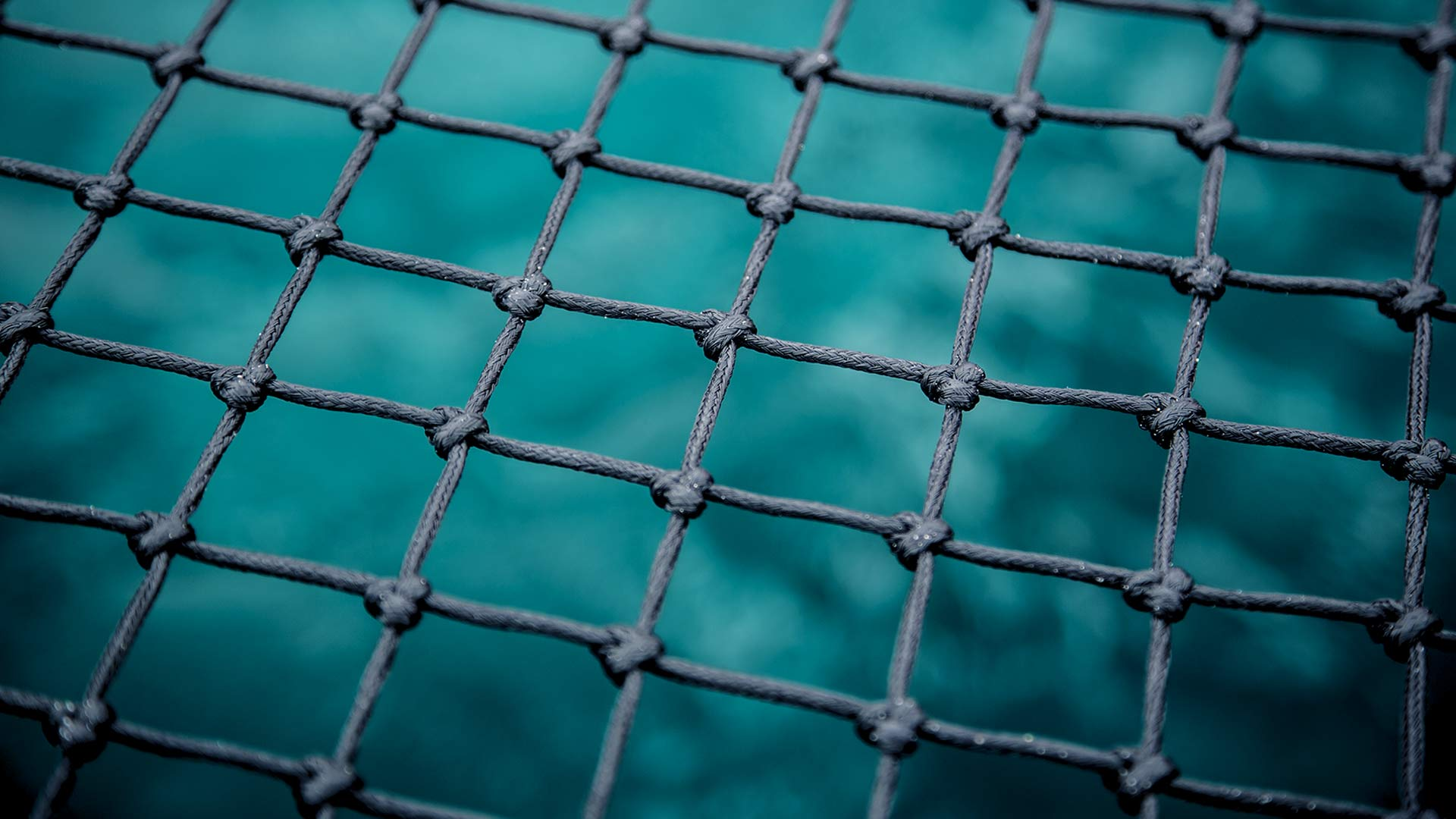kl curacao netting image